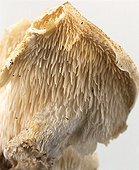 Tooth fungus looped white background