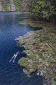 Woman dives along healthy coral reef Raja Ampat islands