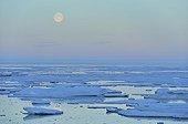 Clair de lune sur la banquise au large de Cap Greg Groenland