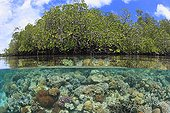 View of coral reef and mangrove in Indonesia