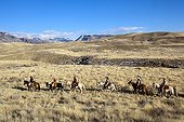 Cowboys in the prairie The Hideout Guest Ranch Wyoming USA ; Edward DeCabooter, Tom Bercher,Ramon Castro, Elisabeth Wolfson,Marijn Werquin,Peter DeCabooter,Rebecca Bercher