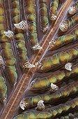 close-up  of mushroom coral Indonesia