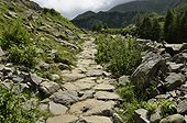 Stony mountain path Prapic Ecrins NP Alps France