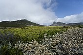 Fynbos Reserve Cape of Good Hope South Africa