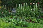 Flowerpots on stakes in a kitchen garden