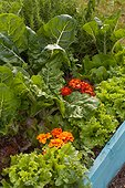 Vegetables and flowers in a squarefoot kitchen garden