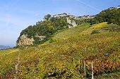 Vineyard of Château Chalon AOC wine yellow Jura France