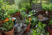 Aromatic plants on a garden terrace