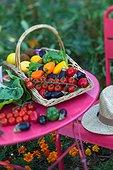 Harvest of mini-vegetables in a kitchen garden