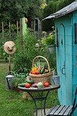 Harvest of vegetables and garden shed
