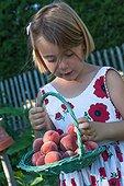 Little girl harvesting peaches in a garden