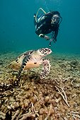 Diver and Hawksbill Turtle above Reef Maldives