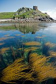 Rouzic Island Nature Reserve 7 islands Brittany France