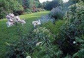 Mixed-border in a garden