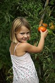 Girl harvesting tomatoes in the garden Provence France
