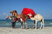 Horseman and Camels on the beach Djerba Tunisia
