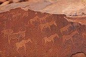 Petroglyphs showing herbivores site Peet Alberts