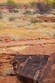 Giraffes petroglyph site Peet Alberts Namibia
