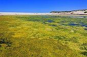 Lagoon polluted Lamberts Bay Atlantic Coast Nambia