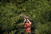 Young boy bird watching in woodland in summer UK
