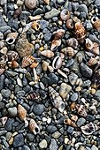 Shells on a pebble beach on the Costa Brava Spain