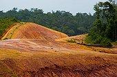 Latérite oxydée en forêt tropicale Guyane Française