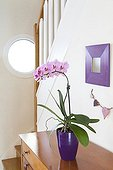 Orchid in bloom in a house