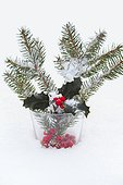 Holly and spruce branche in the snow