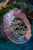 Barrel sponge at Cozumel Reef Caribbean Sea Mexico