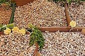 Gastropod ; Snails, Palermo food market, Sicily, Italy, Europe