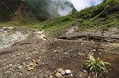 Fumaroles of the Valley of Desolation Island of Dominica