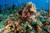 Reef ravaged by a wetting Guajimico Cuba