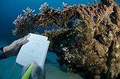 Taking note on the outer reef Marsa Nakari Egypt