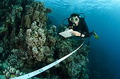 Taking note on the reef Marsa Nakari Red Sea Egypt  ; Implementation of the transect. It is counting individuals selected species along a line 20 m