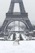 Black-headed Gull in the snow at the Trocadero Paris France