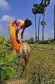 Indian Cobra and woman gathering sticks Tamil Nadu India
