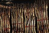 Poissons séchés pêchés dans le Lac Tonlé sap Cambodge