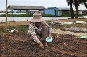 Maraîchage à Kompong Chnnang Cambodge