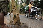 Pêcheur à Kompong Khleang LacTonlé sap Cambodge