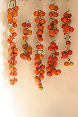Hanging tomatoes on white wall