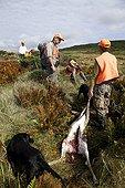 """Cerf de Virginie abattu et chasseur Saint-Pierre et Miquelon ; Cette année la chasse au """"chevreuil"""" ouvre le 19 septembre, pour un mois. Il y a environ 450 chasseurs de chevreuil, avec un quota admis d'un chevreuil par chasseur. Le cerf de Virginie, ongulé nord-américain, a été introduit en 1953 dans le Sud de Langlade, et a progressivement proliféré jusqu'au Cap de Miquelon. L'impact massif du cerf sur la régénération forestière n'est plus à démontrer, et localement les dégâts sont déjà dramatiques. Ce processus, bien compris par les naturalistes locaux, semble encore largement """"ignoré"""" de la communauté des chasseurs, dont le poids politique et social est énorme. Le quota d'un cerf par chasseur cette année est considéré par beaucoup comme excessif, car risquant de mettre en danger la population de cerfs. Toutefois les comptages effectués par la fédération des chasseurs sous-estiment probablement beaucoup la taille réelle de la population."""