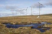 Ferme éolienne de Miquelon  Saint-Pierre et Miquelon ; Mise en service en 2001, la ferme éolienne de Miquelon se compose de 10 éoliennes de 60kW, soit 600kW. L'énergie produite est injectée dans le réseau EDF et assure 15% de la consommation en électricité de Miquelon.