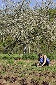 Weeding in an organic plantation in Aveyron  France