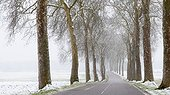 Country road in winter Lorraine France