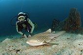 Shark - Andaman Sea Thailand ; Scuba diver and Leopard Shark, Phi Phi Islands, Thailand