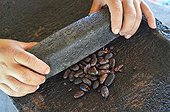Grinding of cocoa beans on a millstone Belize  ; Old Maya way of making the chocolate<br>The Belcampo lodge is focused on the agriturism with its green gardens and its plantations of coffee