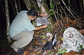 Jaguar or Puma Camera trap survey in Belize  ; Blancaneaux lodge. The property of Francis Ford Coppola, in the heart of the national park of Pines, participated in many projects for the protection of nature. here, the naturalist Roni Martinez