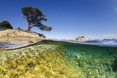 Palombaggia beach Porto-Vecchio Corsica France