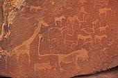 Herbivores and Lion Petroglyph Peet Alberts Namibia  ; Kunene Region