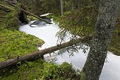Foam on stream in the woods PN Tiveden Sweden